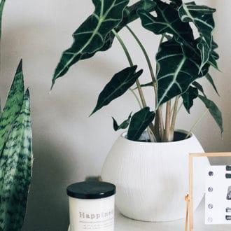 houseplant white pot on bedside table